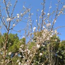 Blue-Provence-0571