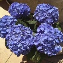 Blue-Provence-1707