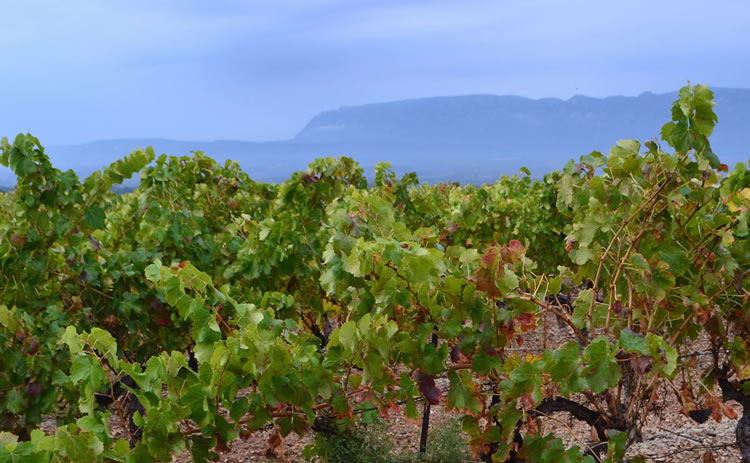 Provence_hiking_0375