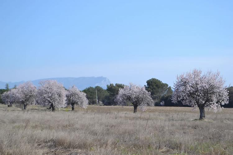 Springtime in Provence