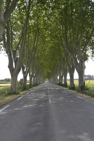 St-Remy-de-Provence-0381