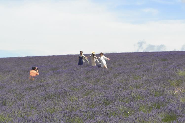 provence-lavender_0532