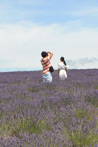 provence-lavender_0536