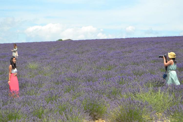 provence-lavender_0537