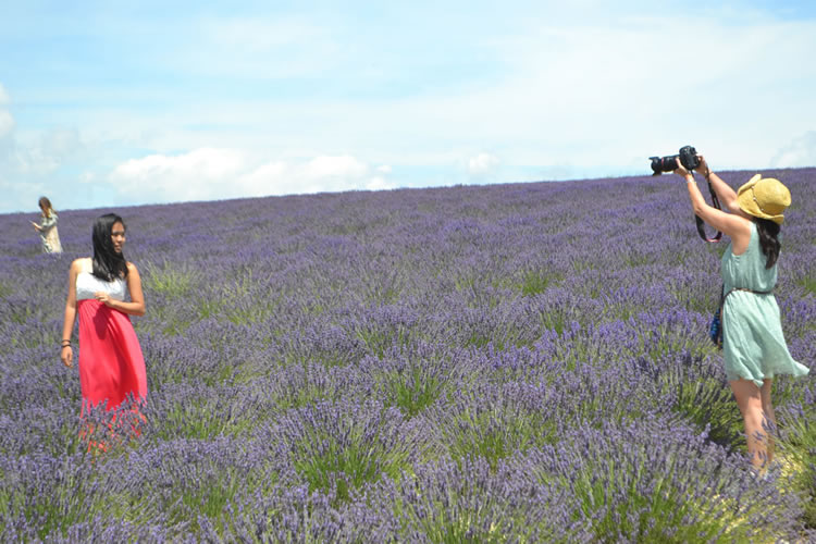 provence-lavender_0539