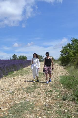 provence-lavender_0542