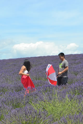 provence-lavender_0544