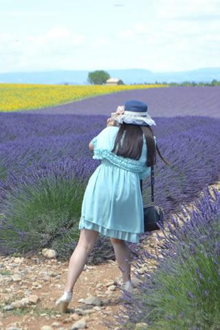 provence-lavender_0558