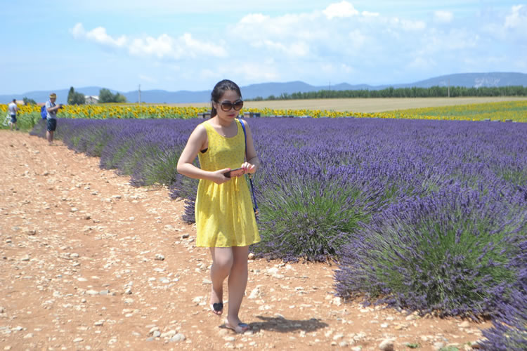 provence-lavender_0559