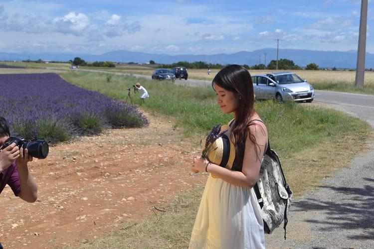 provence-lavender_0576