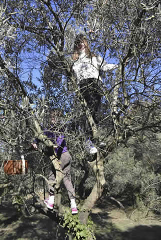 Olive-picking-in-December-116