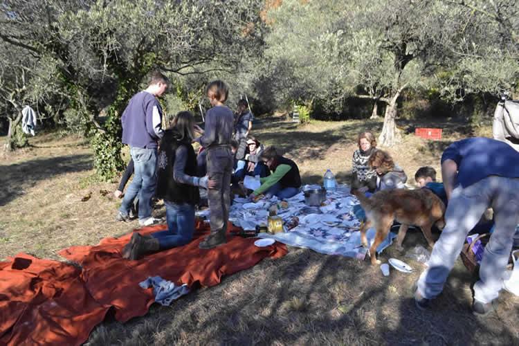 Olive-picking-in-December-134